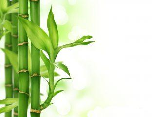 بامبو کانال گل من و تو