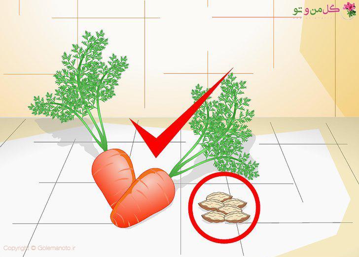 انتخاب بذر مناسب هویج