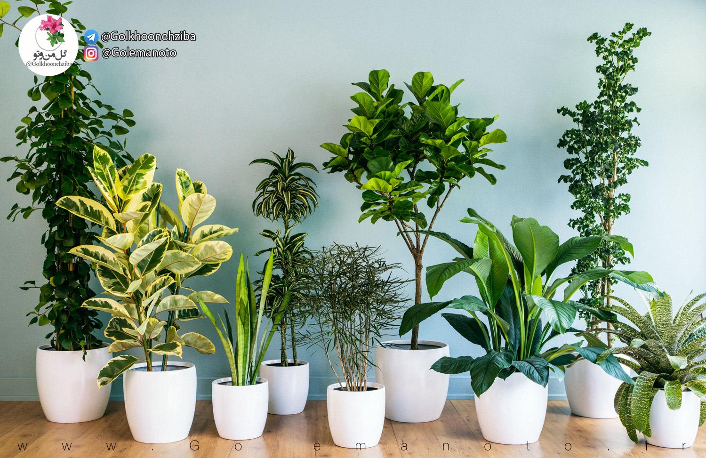روش های آبیاری گیاهان آپارتمانی