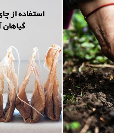 استفاده از چای کیسه ای برای گیاهان