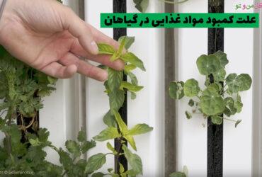 علت کمبود مواد غذایی در گیاهان