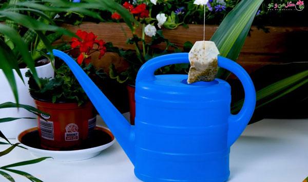 مزایای چای کیسه ای برای گیاهان