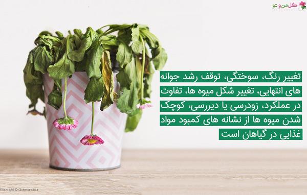 نشانه و علت کمبود مواد غذایی در گیاهان