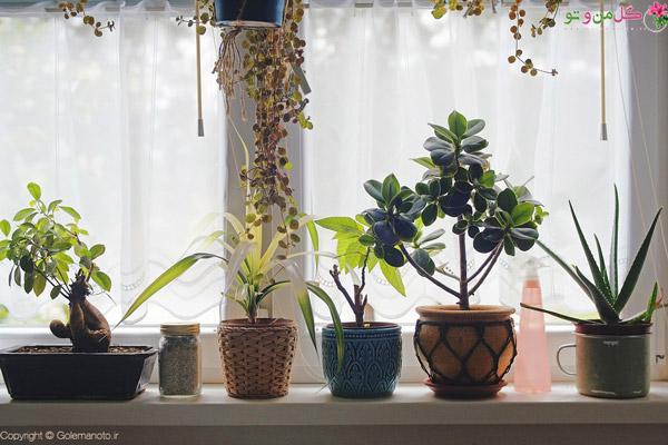 نور مناسب برای گیاهان شاداب
