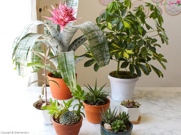 گلدان مناسب- داشتن گیاهان شاداب