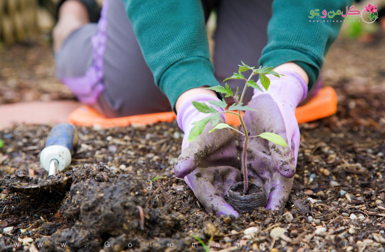 فایده باغبانی برای سلامتی