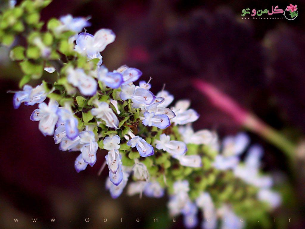 حسن یوسف _ گل من و تو