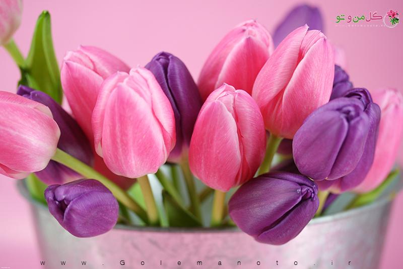 گل و گیاه در کشورهای مختلف