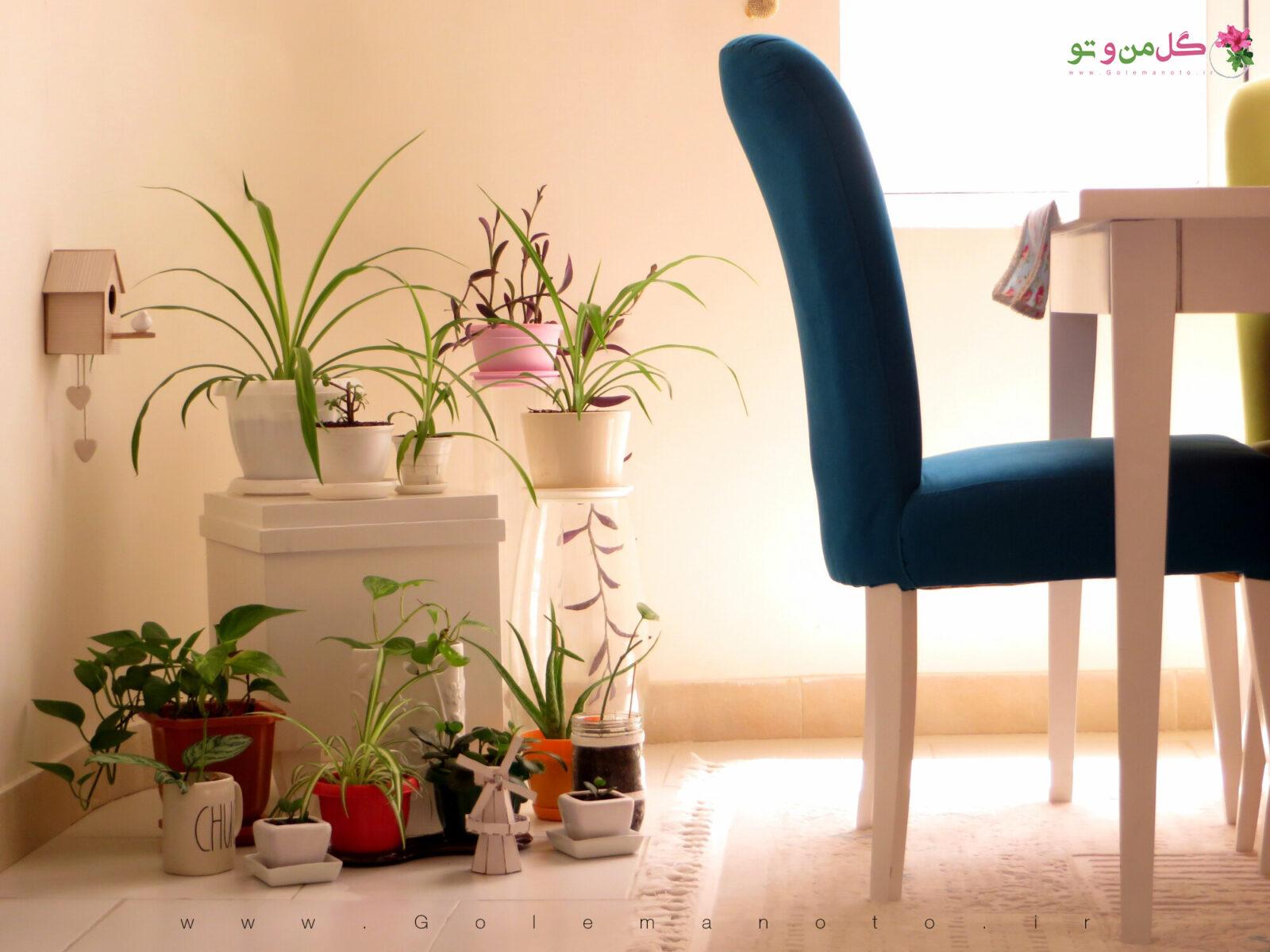 گل من و تو - دکوراسیون خانه