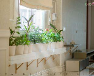 نگهداری گل و گیاهان آپارتمانی