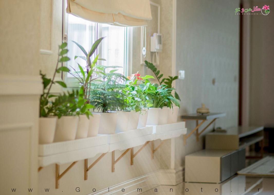 نگهداری گل و گیاه در خانه
