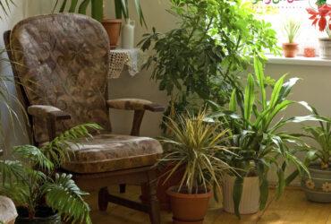 گیاهان تصفیه کننده هوا - گیاه تصفیه کننده هوا
