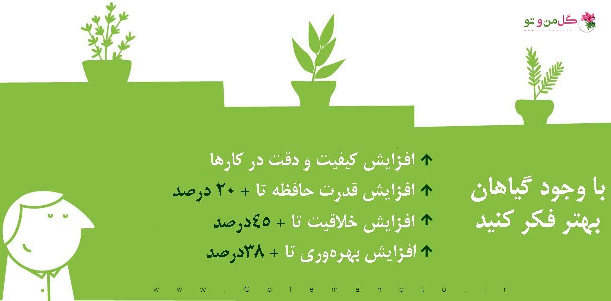 آرمش گیاهان آپارتمانی