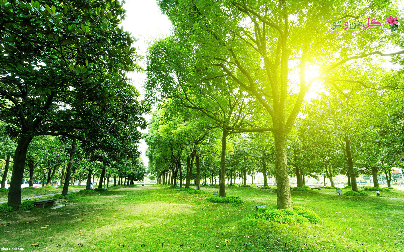 green tree sun shine سبزسازی زمین؛ راهی مؤثر برای کاهش سطوح کربن