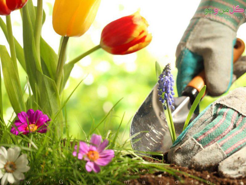 فواید باغبانی - گل من و تو