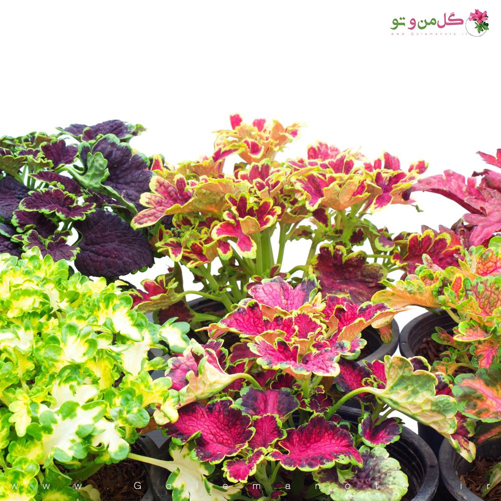 حسن یوسف - گل من و تو