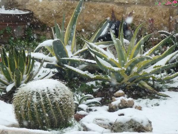 دمای کاکتوس در خواب زمستانی