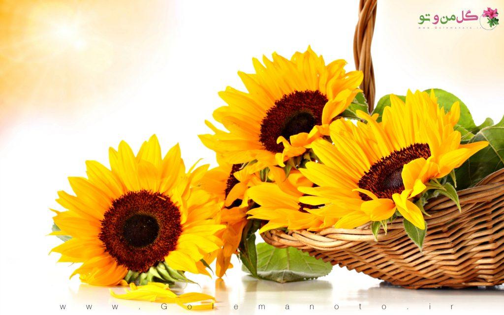آفتاب گردان - گل من و تو