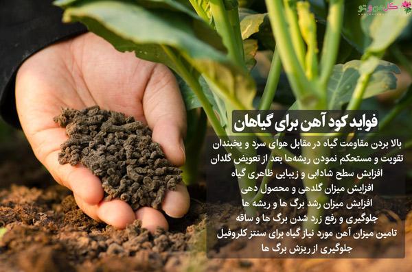 فواید کود آهن برای گیاهان