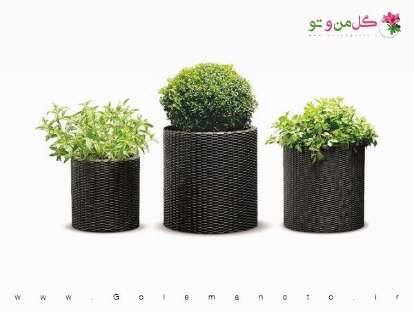 گلدان تزئینی گیاهان دارویی