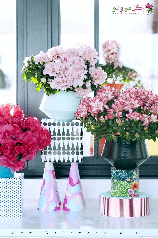 گل آزالیا - گل من و تو