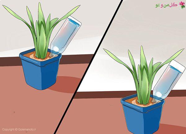 آبیایر گیاهان با بطری در مسافرت
