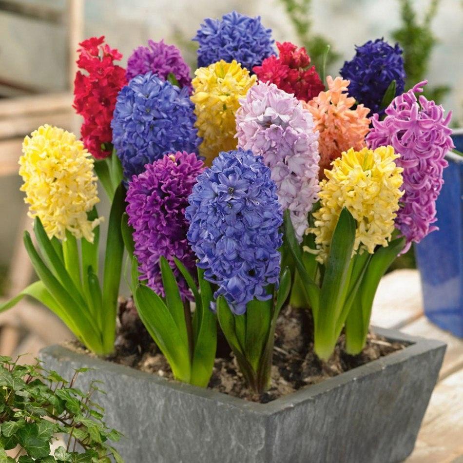 آموزش کاشت سنبل-گل من و تو