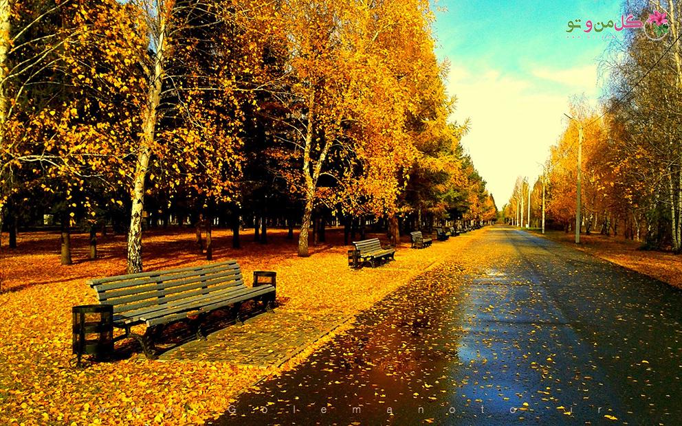 پاییز و ریزش برگ ها - گل من و تو