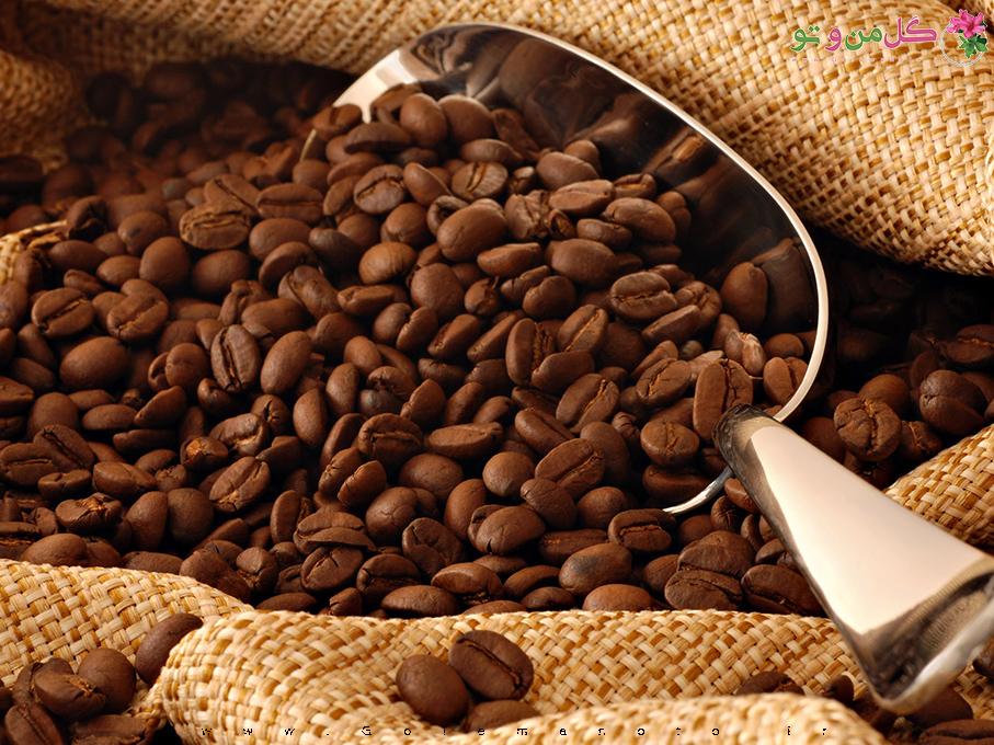 تاثیر قهوه بر طول عمر - گل من و تو