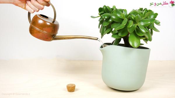 روش آبیاری گیاهان آپارتمانی