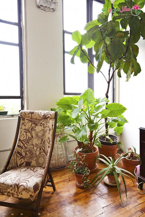 گل و گیاه آپارتمانی طبیعی در دکوراسیون منزل