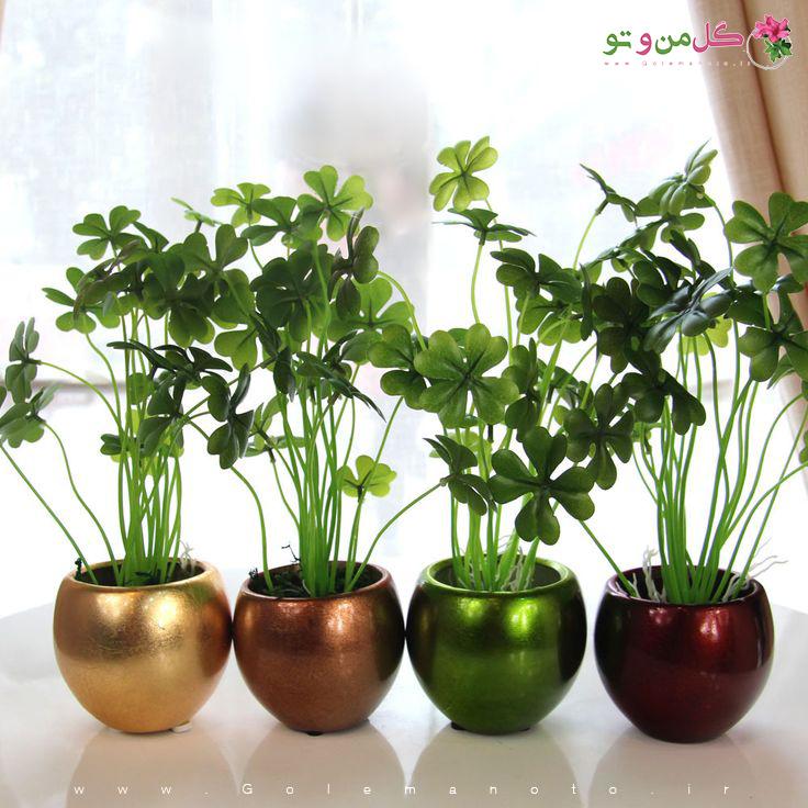 ایده نگهداری گل و گیاه آپارتمانی
