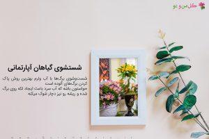شستشوی گیاهان آپارتمانی