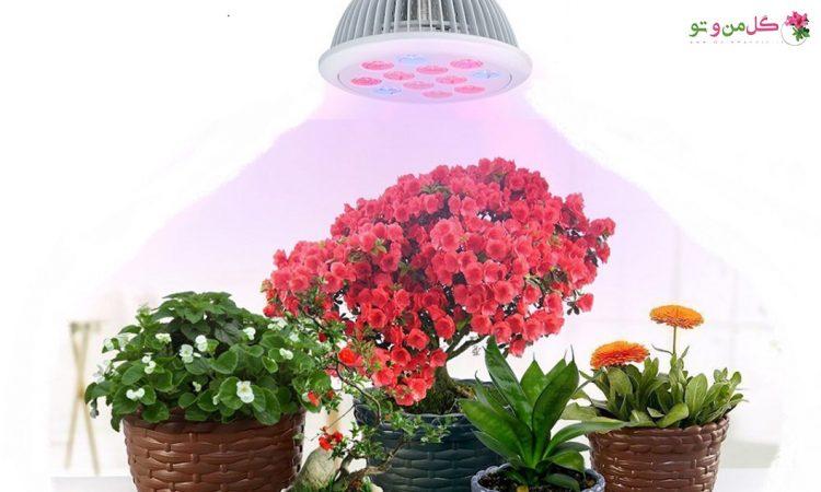 نور مصنوعی برای گیاهان آپارتمانی