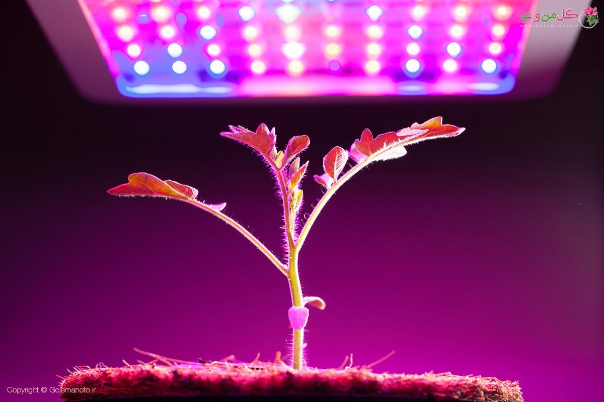 فاصله نور مصنوعی از گیاه