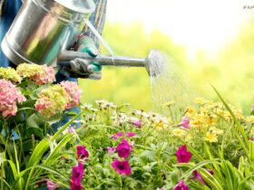 آبیاری گل و گیاه در مسافرت- گل من و تو