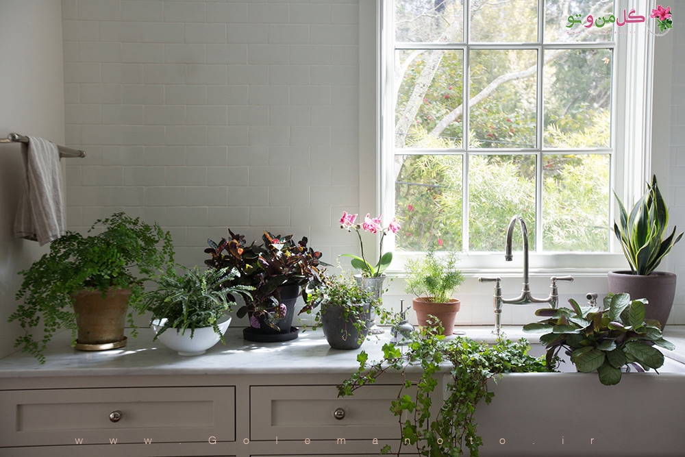 گل و گیاه آپارتمانی در دکوراسیون
