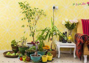 بیماری های رایج گل و گیاه آپارتمانی