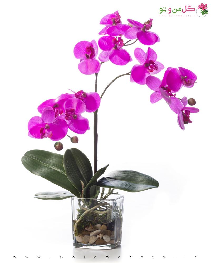 معرفی و نگهداری گل ارکیده-گل من و تو