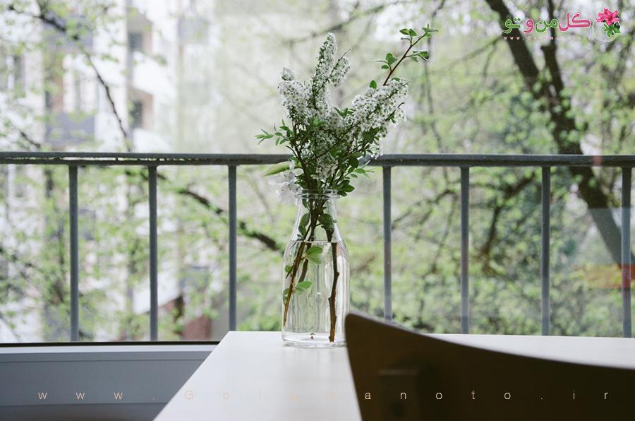 گل و گیاه آپارتمانی در منزل