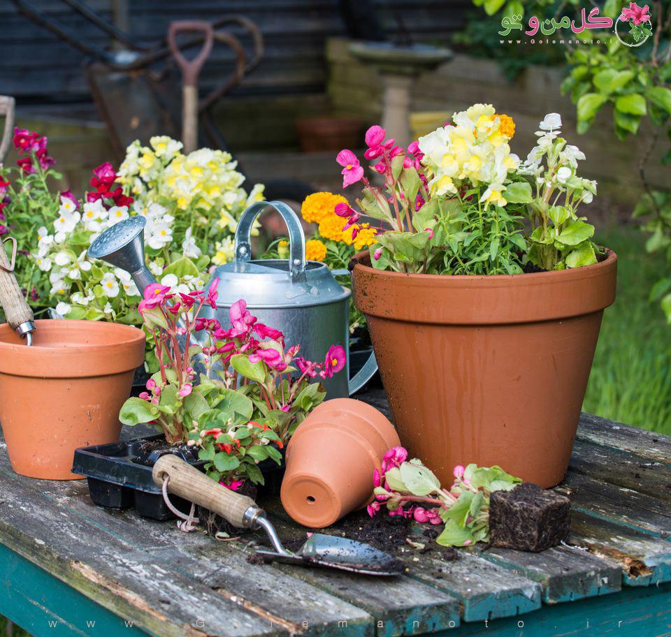 تعویض گلدان- گل من و تو