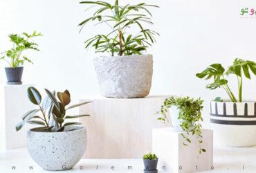 اهمیت منافذ گلدان برای گیاهان