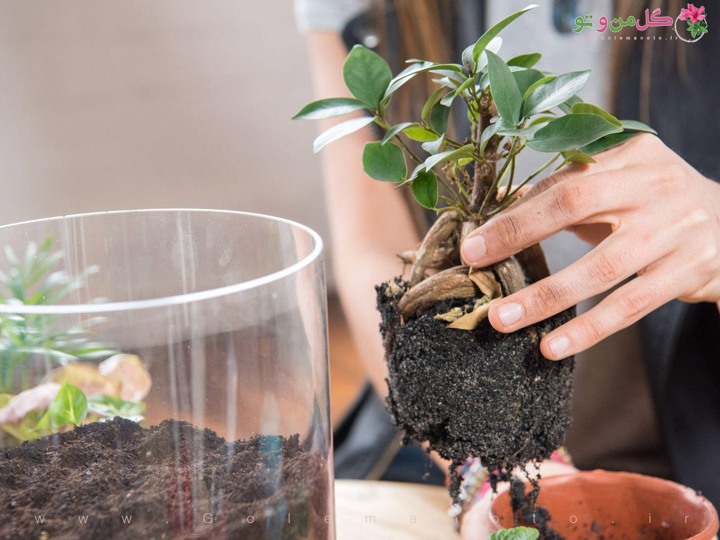 آموزش ساخت باغ شیشه ای