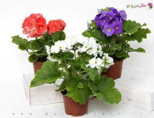 فواید و عیوب تعویض گلدان - گل من و تو