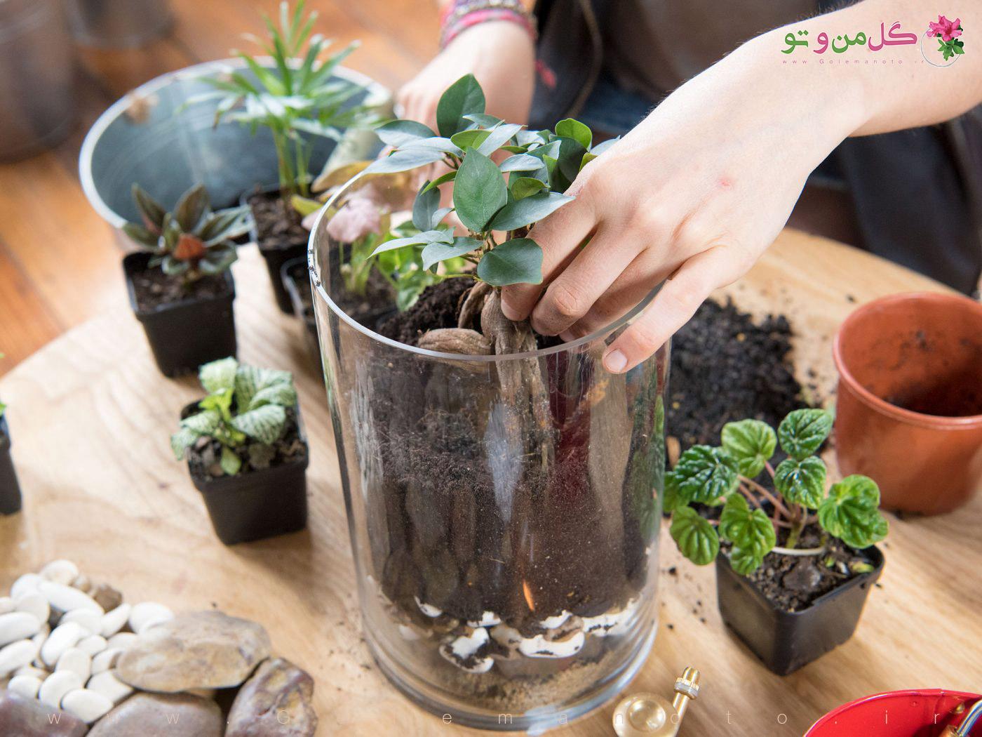 آموزش ساخت تراریوم - کاشت گیاه