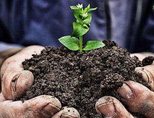اسیدی کردن خاک گیاهان-گیاهان اسیدی دوست