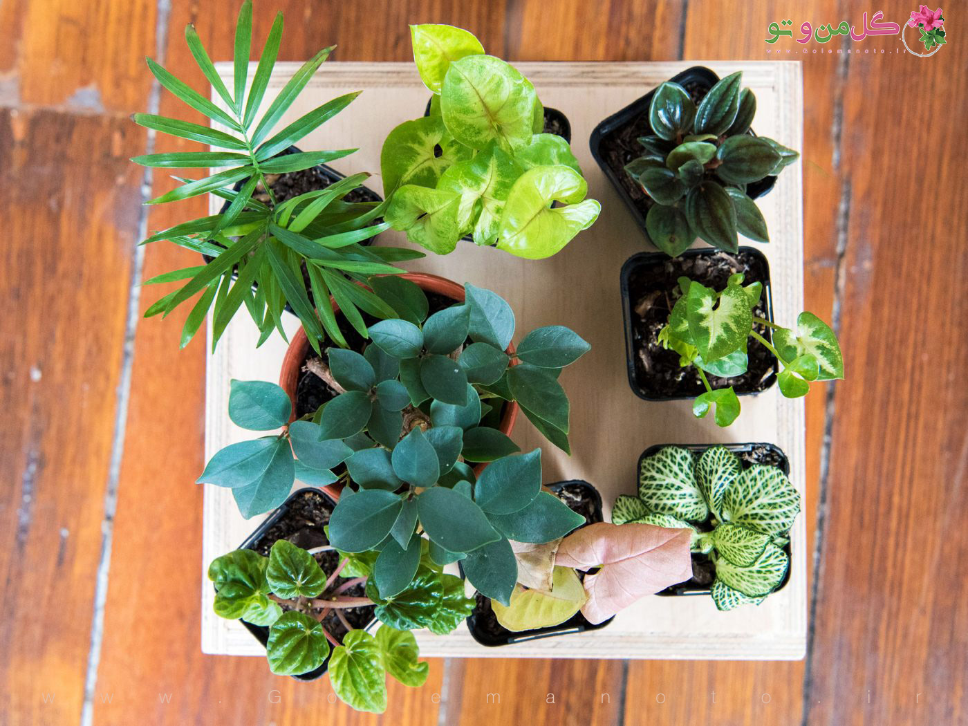 انتخاب گیاه برای تراریوم