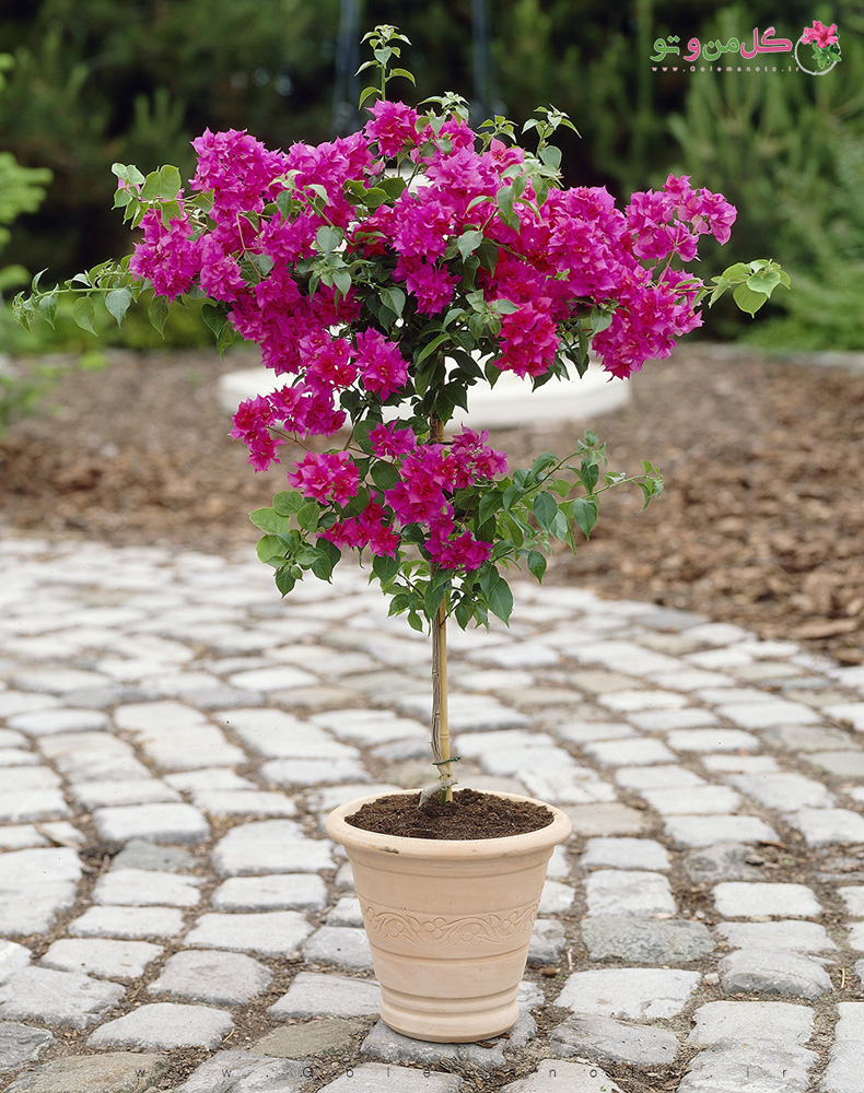 نیازها و معرفی گل کاغذی - گل من و تو
