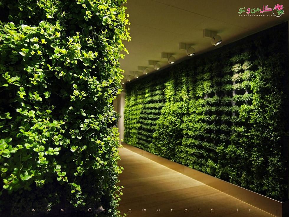 دیوار سبز - ایجاد دیوار سبز