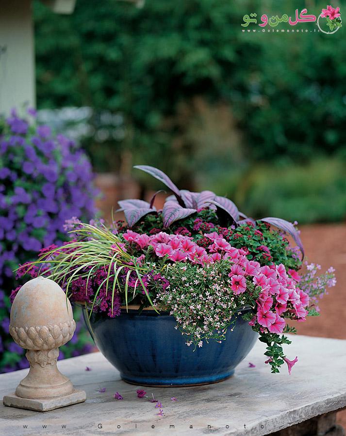 نگهداری و تکثیر گیاه سپر ایرانی - گل من و تو